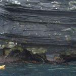 BOEC kayaking at cliffs and see birds