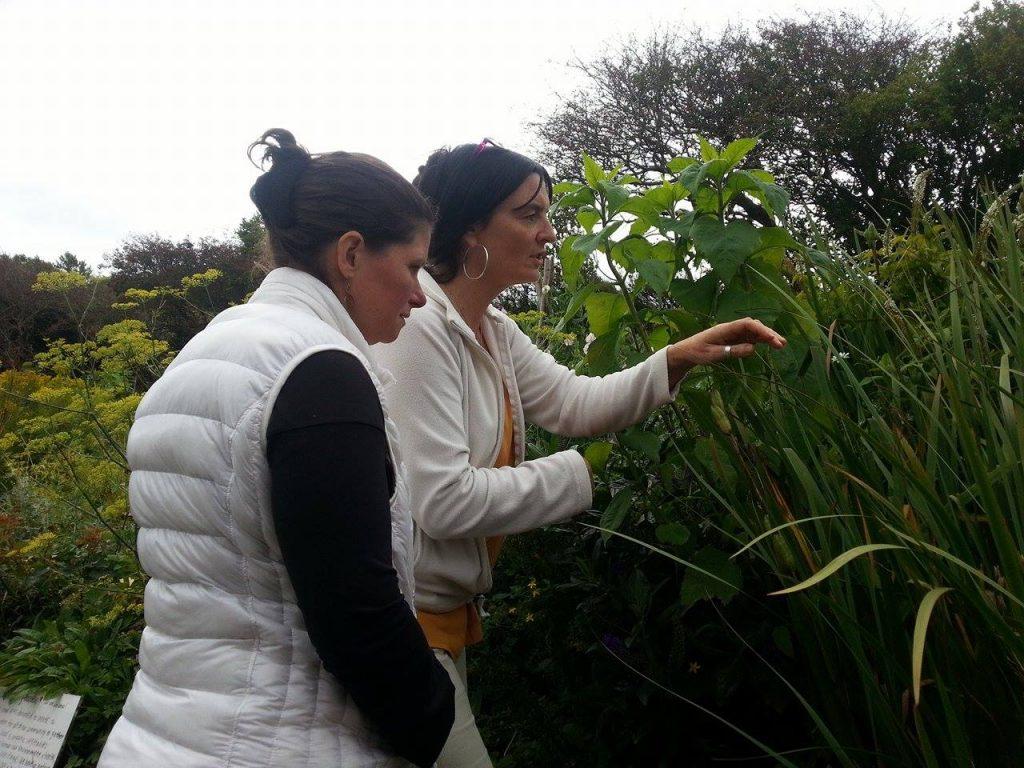 Herb Walk Herb roots, herbalist Burren