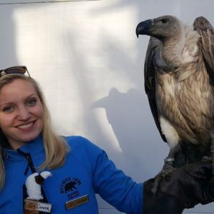 Bird of Prey at Ailwee Caves, family adventure
