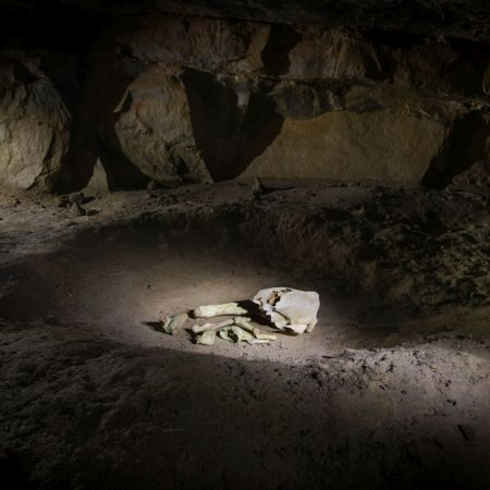 Bones discovered in a Cave, adventure, discover, holiday