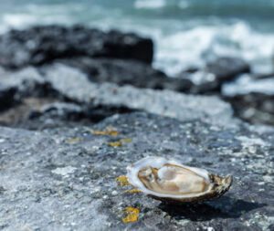 Flaggy shore oysters, artisan food producers in Co.Clare, reconnect, adventure
