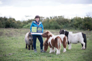 Burren Experience Walks, small ponies, escape nature holiday