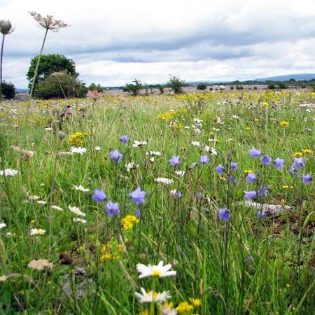 The Burren in Spring