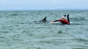 Surfing with Dusty the Dolphin, adventures on the Wild Atlantic Way