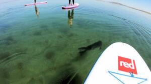 Water sports Clare, adventure outdoors, Aloha Surf School